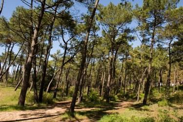 La forêt domaniale de Longeville, piste 16
